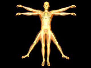 Human Form