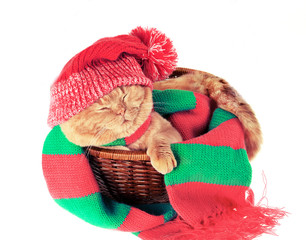 Cat wearing hat and scarf sleeping in a basket