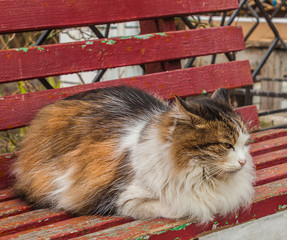 Tricolor cat sitting on a bench