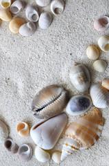 coquillages dans le sable
