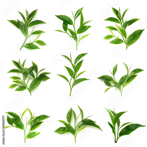Fototapeta Green tea leaf isolated on white background