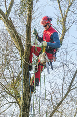 Arbeiten am Baum