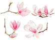 Magnolia flower twig spring collection on white, clipping path - 80843980