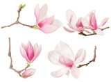 Fototapety Magnolia flower twig spring collection on white, clipping path