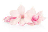 Fototapety Magnolia, pink flowers and buds group on white, clipping path