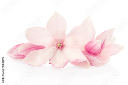 Keuken foto achterwand Lente Magnolia, pink flowers and buds group on white, clipping path