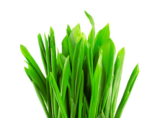 Wild leek isolated on white