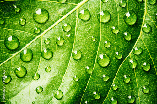 Green leaf with drops of water - 80847572