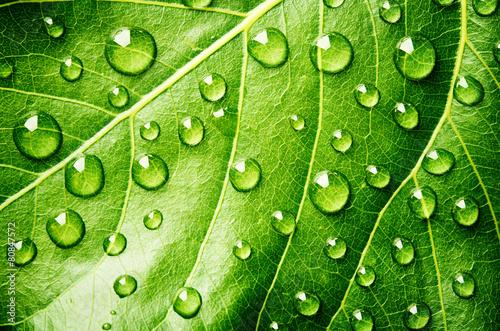 Papiers peints Vegetal Green leaf with drops of water