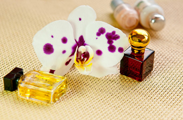 Orchid flower and cosmetic products