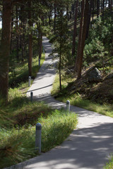 Concrete path winding through pine trees