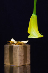 Yellow calla lily and gift on a black  background
