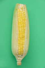 Fresh corn (pop art style)
