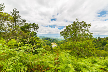 Tana Toraja landscape and fern forest