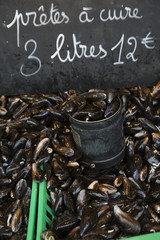 Large Group of mussels full frame on a market