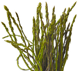 A bunch of freshly picked wild asparagus on a white background