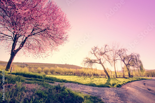 Trees and spring