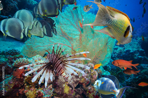 Colorful underwater reef with coral and sponges - 80861973