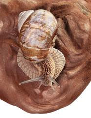 Snail on pebble
