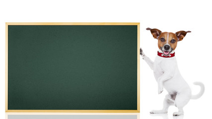 dog school student