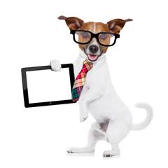 businessman dog