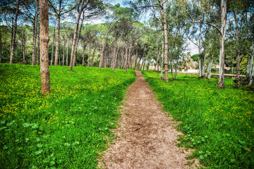 path in a pinw forest in Sardinia