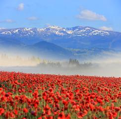 Nice poppy field in mountains