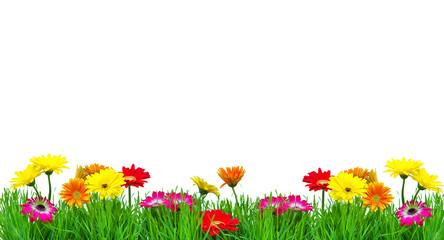 Muttertag Blumenwiese