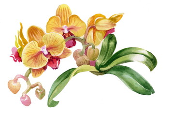 Watercolor colorful orchid flowers on white background