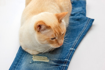 cat with jeans
