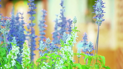 blue flowers in spring garden shallow DOF