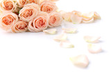 Fototapety Bouquet of beautiful fresh roses isolated on white