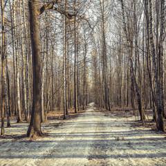Long path.