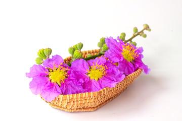 Flowers basket - Stock Image