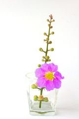Purple Bouquet - Stock Image