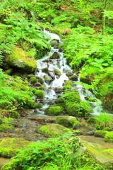 Moss and stream