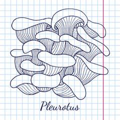 Pleurotus mushrooms bunch