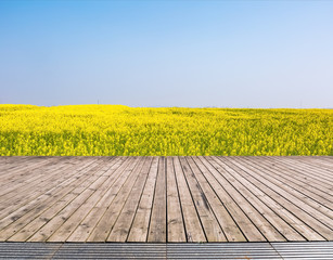 rapeseed flowers were yellowing the fields