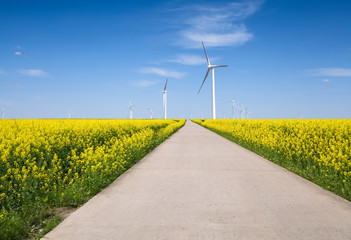 spring landscape and wind farm