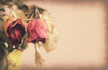 Vintage paper texture, withered or died rose with copy space on