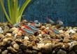 aquarium - 80904304