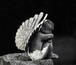 Child Angel statue on gravestone - 80906395