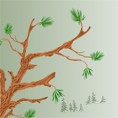 Old pine branch vector