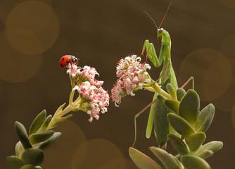 mantis and ladybug live next door