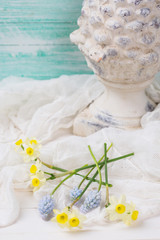Postcard with fresh flowers daffodils, muscari and decotative co