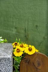 Eine Blume mit gelben Blüten