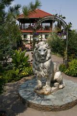 Парковый лев