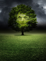 Doppelbelichtung Porträt im Baum