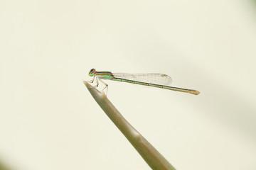 Closeup of dragaon fly on stem