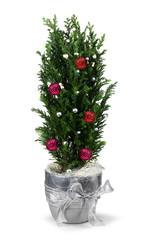 Christmas cypress decoration